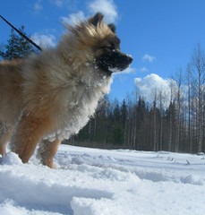 Dogs picture winter