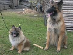 Naapurin koiran kanssa -koirakuva yhdessä