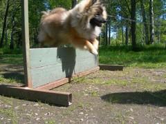 Hyppäämässä