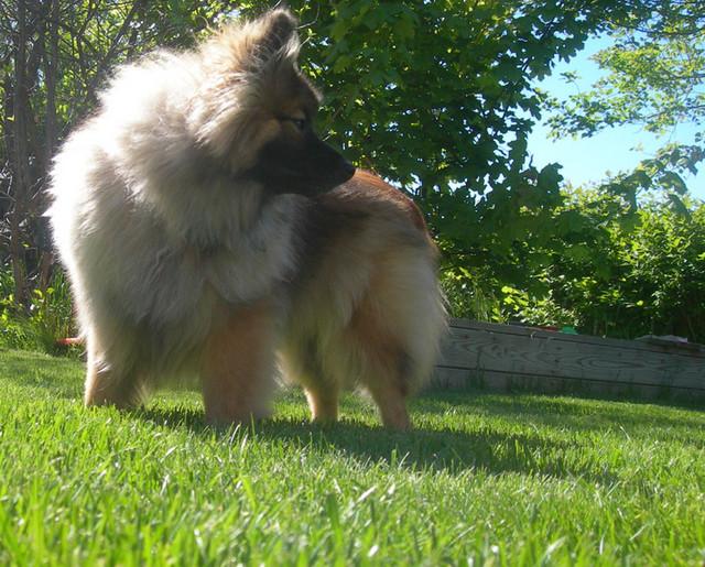 Koira pihalla