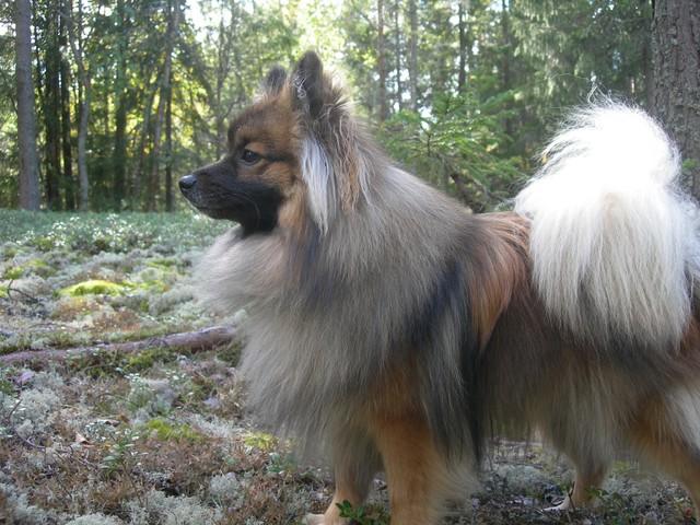 Koira Metsässä