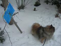 Koirien oma polku