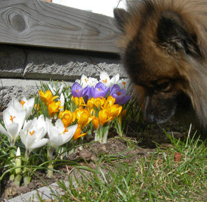 Eka kukkia nuuskimassa