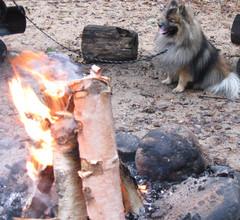 koira odottaa makkaraa