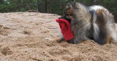 koira lapasleikki
