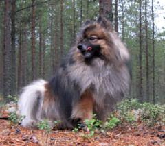 Koira luonnossa
