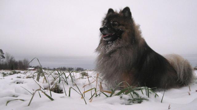 hese lumessa