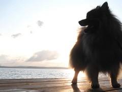 Näsijärven rannalla auringon laskiessa