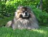 Kleinspitz -koirakin nauttii tuulesta