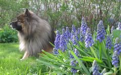 KevätvirtAA