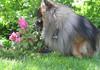 Rhodot ovat kiinnostavia kukkia