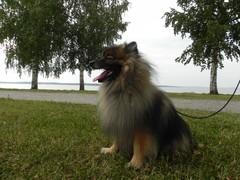 Näsijärven rannalla