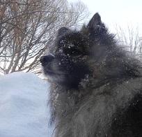 Luminen katse