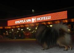 hese_hotellilla