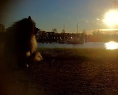 Aurinko laskee Oulussakin