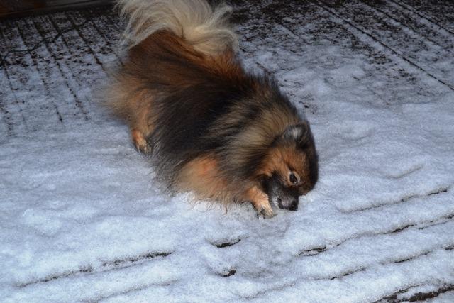hese rakastaa lunta