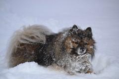 lumessa hese