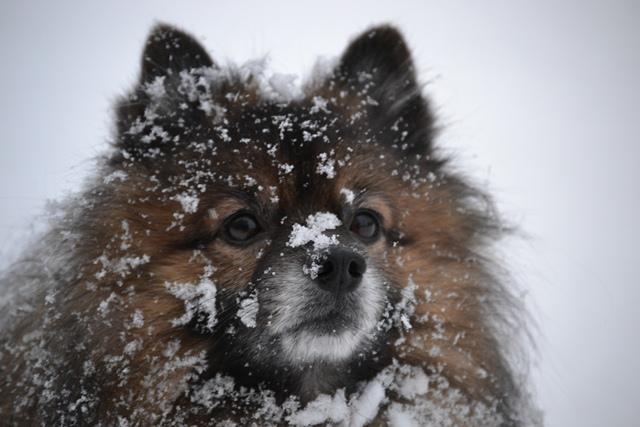 Luminen Hese