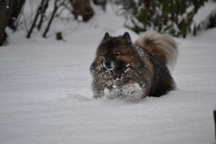 Lumijuoksua hangessa