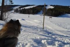 Tahkolle...hiihtään