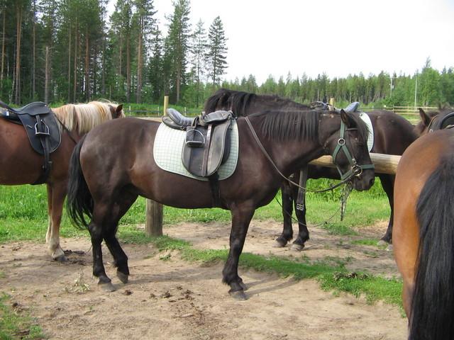 hevoskuvat 002