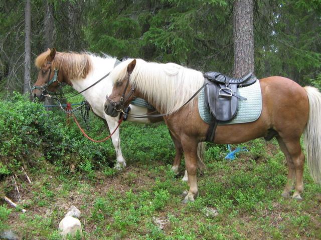 hevoskuvat 013