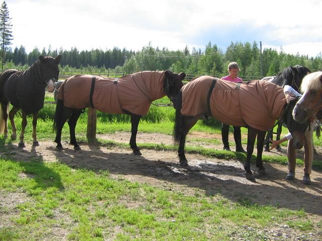 hevoskuvat 033