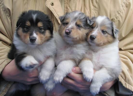 sisaruksia ,Yasmi,Nino ja Wilma