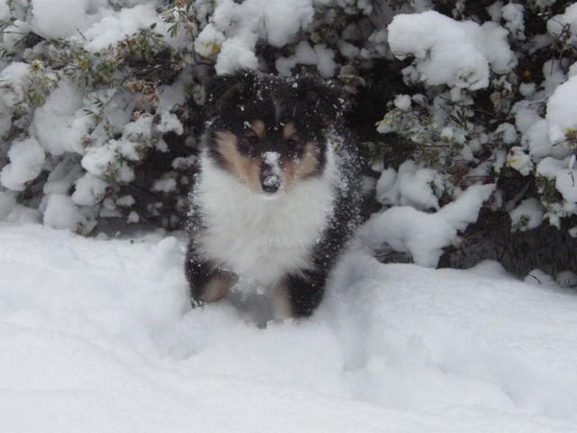 Yasmi ja ensi lumi