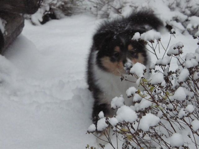 Yasmi ja uutta,lunta!