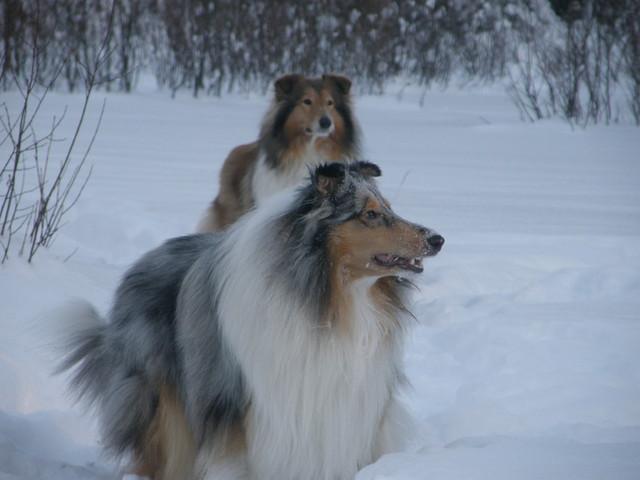 Nino nauttii talvesta Zeran kanssa