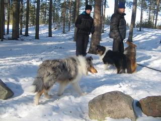 Nino,Yasmi ja Zera keväällä 2009 lenkillä